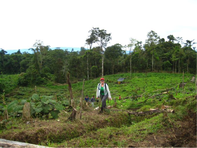Bottom-up but also top-down – why local institutions matter for REDD+